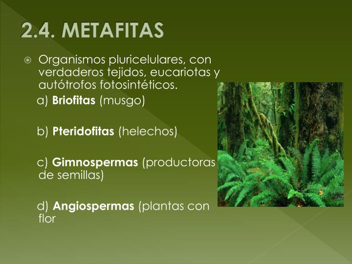 2.4. METAFITAS