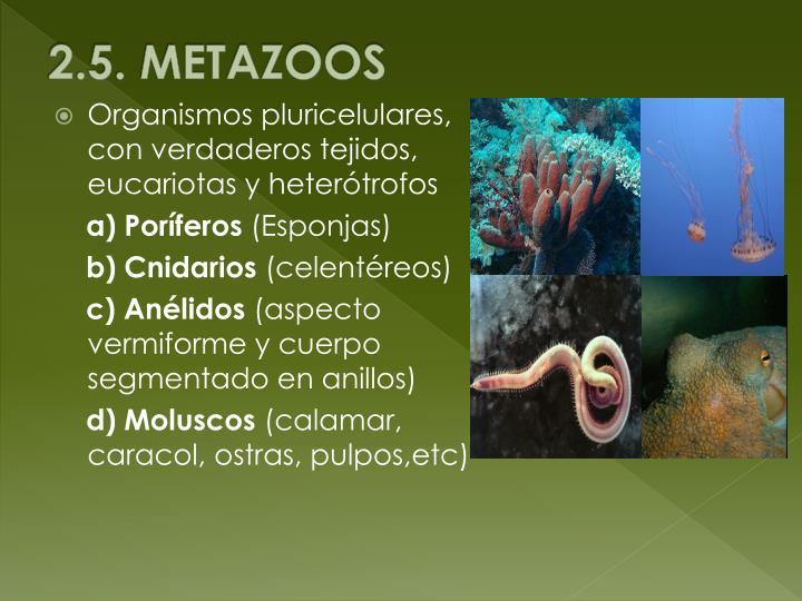 2.5. METAZOOS