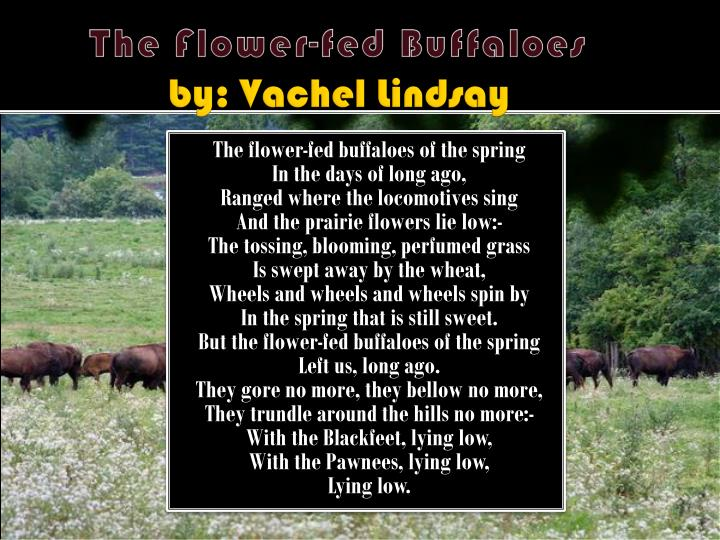 flower fed buffaloes Tips for literary analysis essay about the flower-fed buffaloes by vachel lindsay.