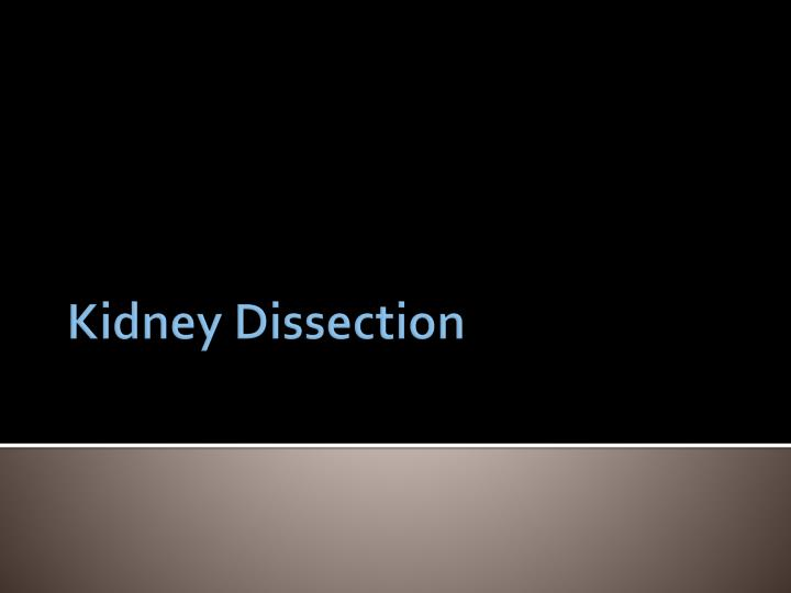 Kidney Dissection