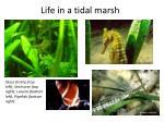 life in a tidal marsh1