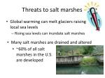 threats to salt marshes