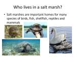 who lives in a salt marsh