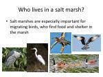 who lives in a salt marsh1