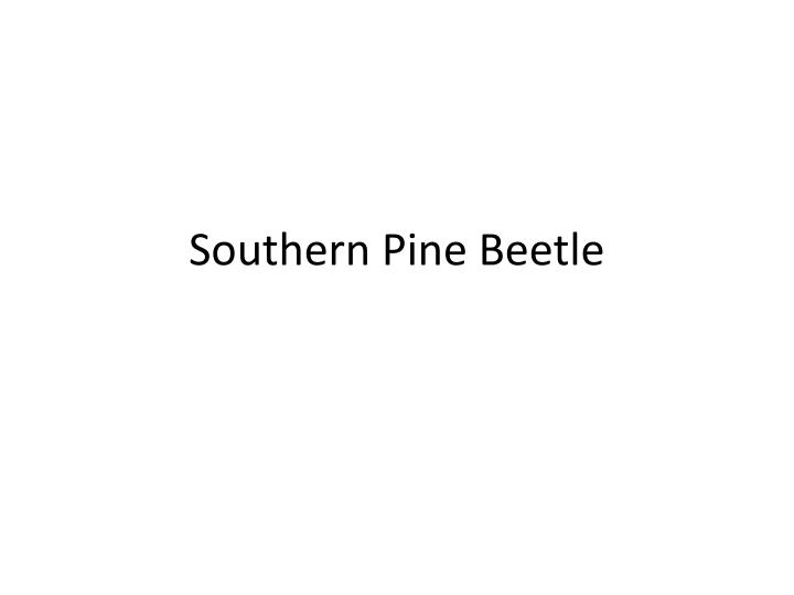 Southern Pine Beetle