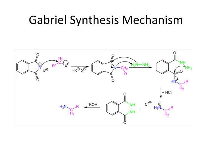 Gabriel Synthesis Mechanism