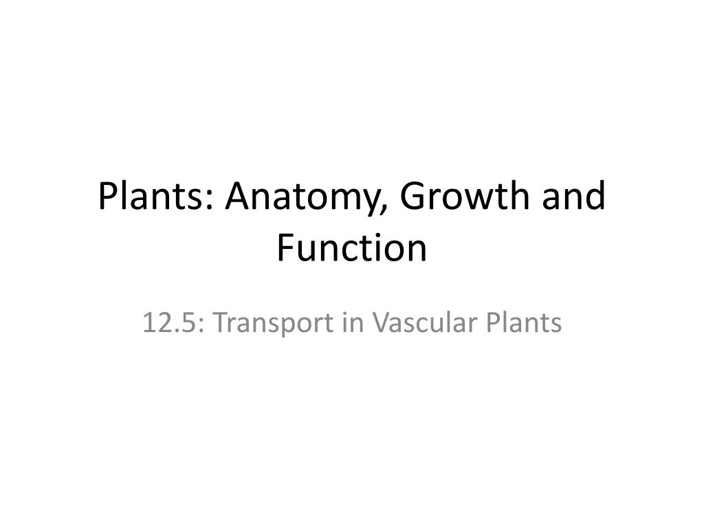Ppt Plants Anatomy Growth And Function Powerpoint Presentation