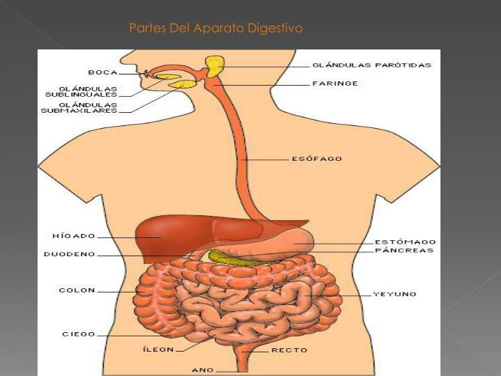 PPT - El Aparato Digestivo PowerPoint Presentation - ID:2328477