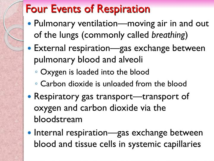 Four Events of Respiration