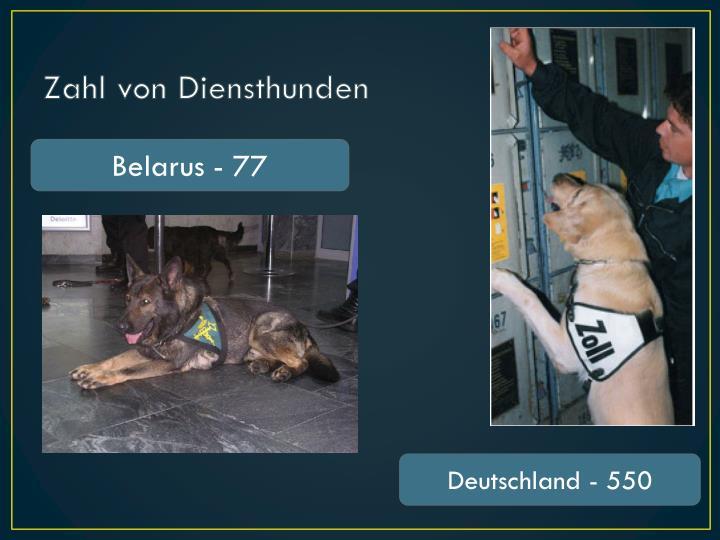 Zahl von Diensthunden