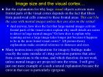 image size and the visual cortex