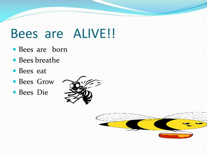Bees are alive