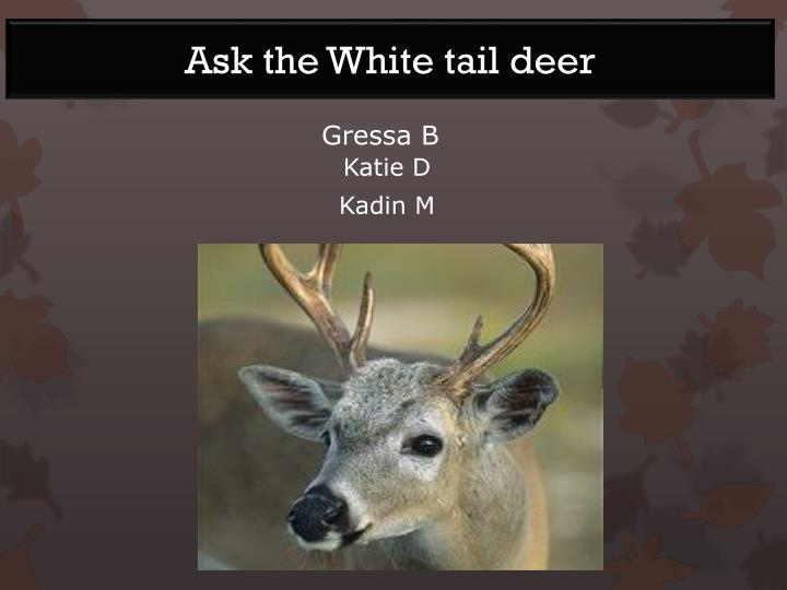Ask the White tail deer