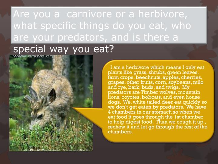 Are you a  carnivore or a herbivore, what specific things do you eat, who are your predators, and is there a special way you eat?