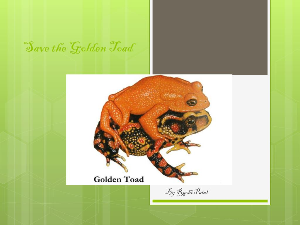 ppt save the golden toad powerpoint presentation id 2334628