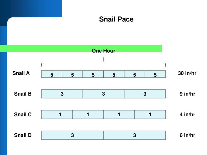 Snail Pace