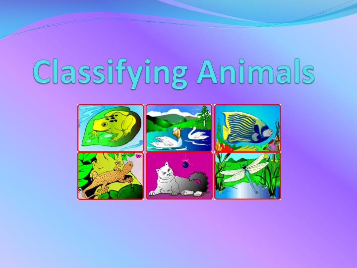 PPT - Classifying Animals PowerPoint Presentation - ID:2337289