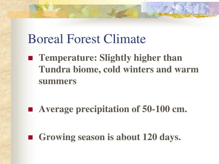 Boreal Forest Climate