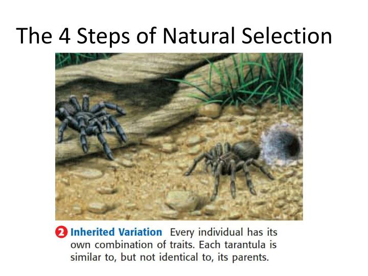 How Does Competition Influence Natural Selection