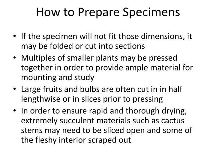 PPT - Preparation of Plant Specimens (UF Herbarium Instructions ...