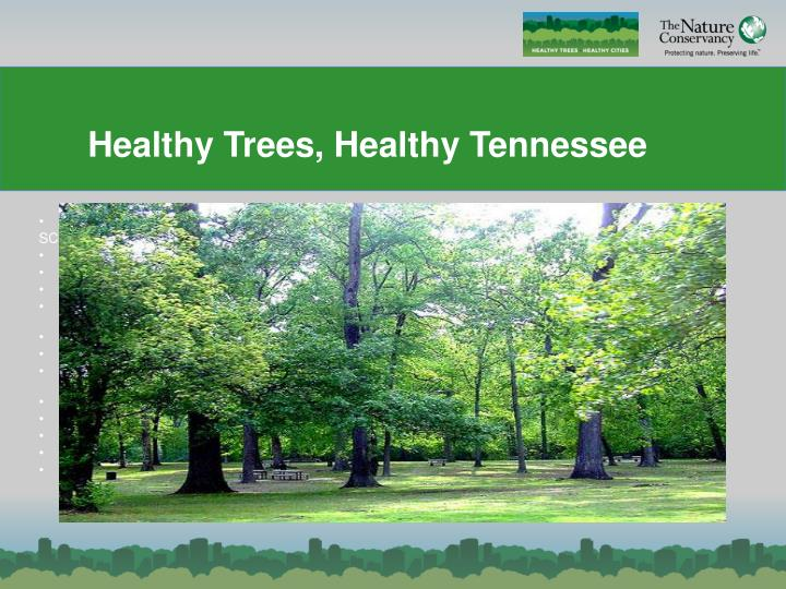 healthy trees healthy tennessee n.