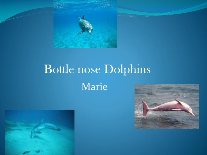 an analysis of the bottle nosed dolphin in the research of sea animals Effects of tourist boats on the behaviour of indo-pacific bottlenose dolphins off the south coast of zanzibar endangered species research 11: 91 - 99 constantine, r 2001 increased avoidance of swimmers by wild bottlenose dolphins (tursiops truncatus) due to long-term exposure to swim-with-dolphin tourism marine mammal science.