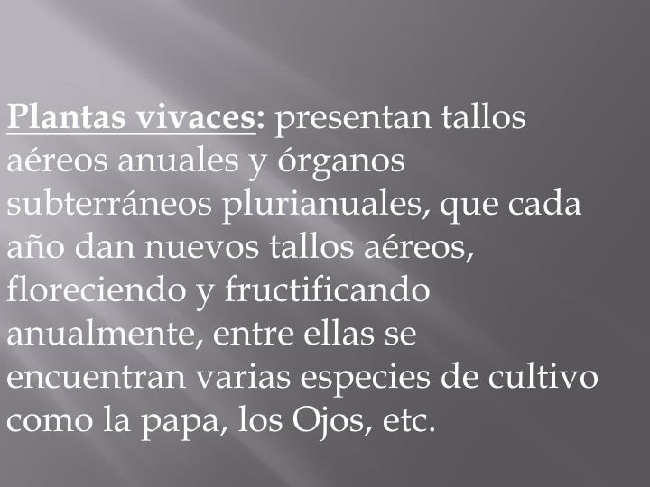 Plantas vivaces