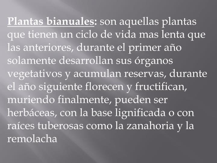 Plantas bianuales
