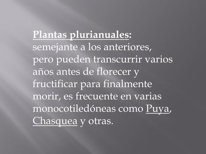 Plantas plurianuales