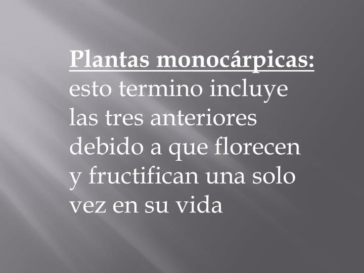 Plantas monocárpicas: