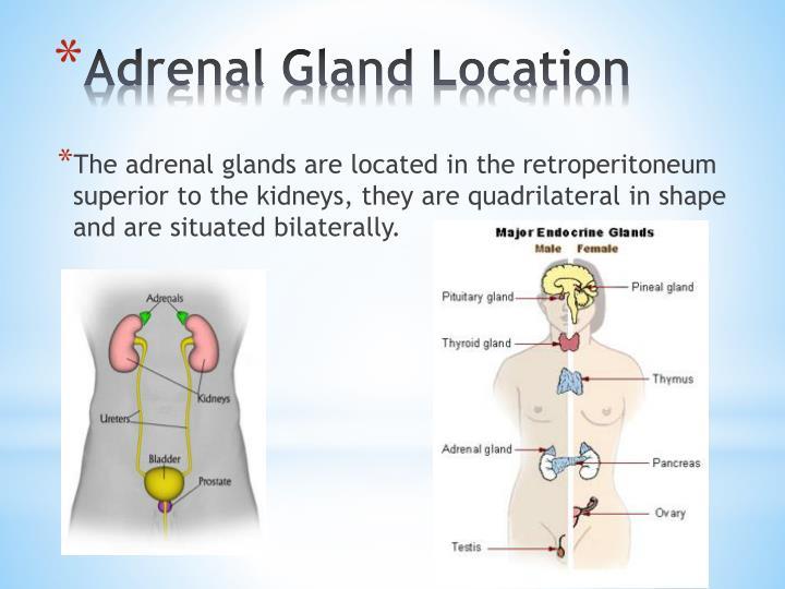 Ppt Adrenal Gland Powerpoint Presentation Id2341096