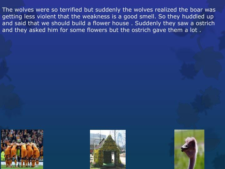 The wolves were so terrified but suddenly the wolves realized the boar was getting less violent that the weakness is a good smell. So they huddled up and said that we should build a flower house . Suddenly they saw a ostrich and they asked him for some flowers but the ostrich gave them a lot .