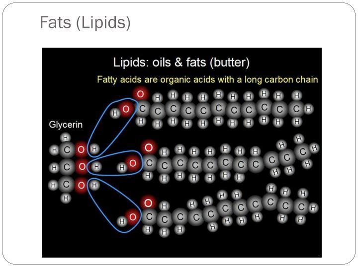 Fats (Lipids)