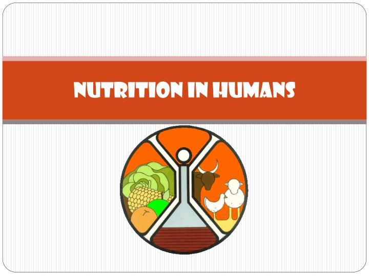 Nutrition in humans