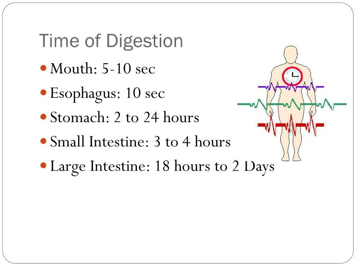 Time of Digestion
