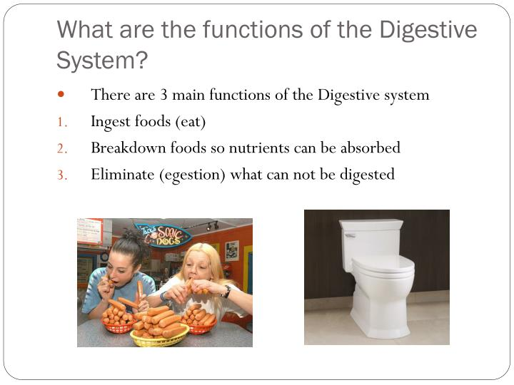What are the functions of the Digestive System?
