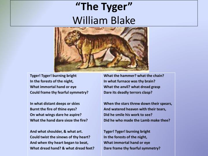 poem analysis of william blakes the tyger The two poems written by william blake feature animals that are antithetical, one symbolizing the goodness, peace, harmony and unity in the world whilst the other the presence of darkness in the world blake makes a similarity between a lamb and a child which are both gentle, mild and crooning.