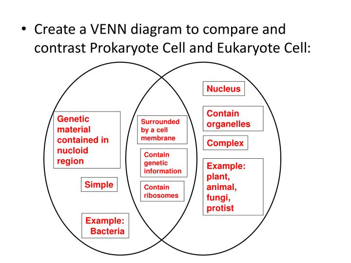 what are the differences between a prokaryotic and eukaryotic cell