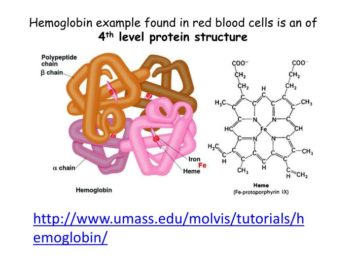 Hemoglobin example found in red blood cells is an of