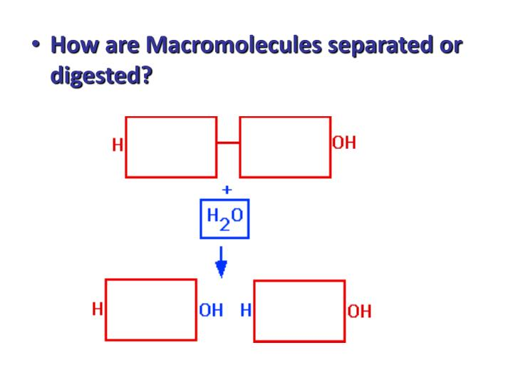How are Macromolecules separated or digested?