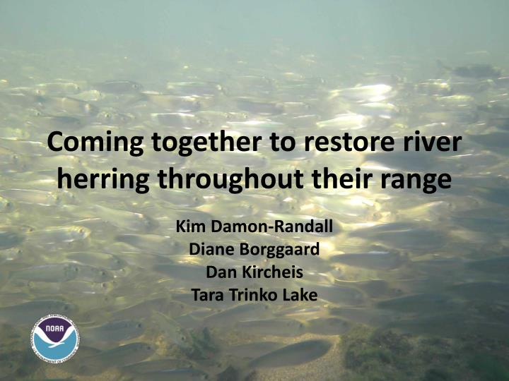 Coming together to restore river herring throughout their range