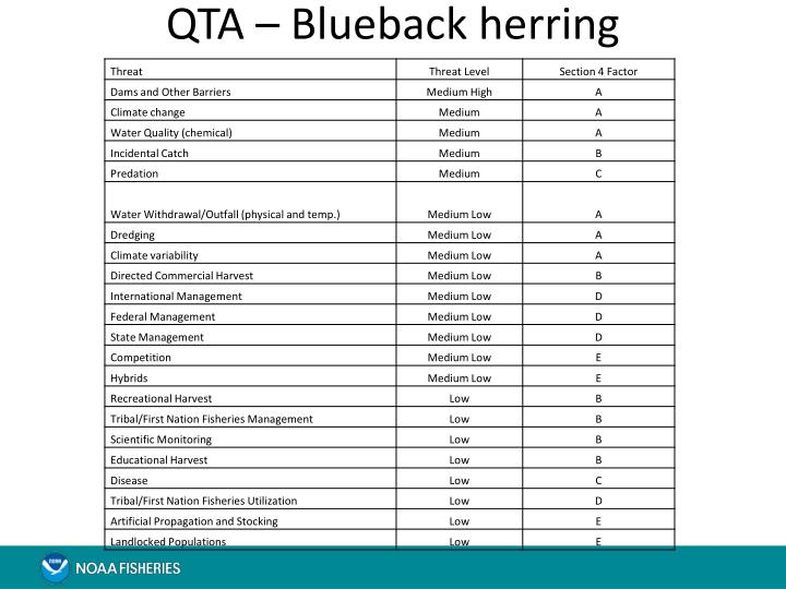 QTA – Blueback herring