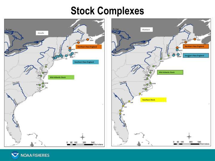 Stock Complexes