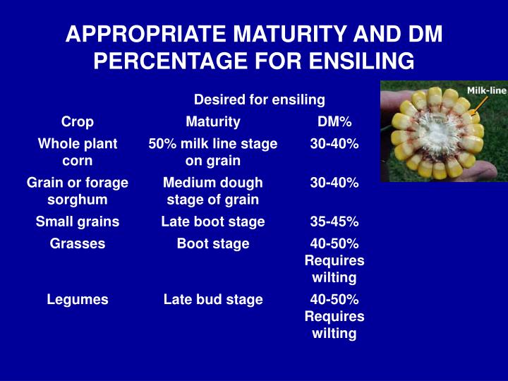 APPROPRIATE MATURITY AND DM PERCENTAGE FOR ENSILING