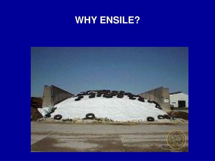 Why ensile