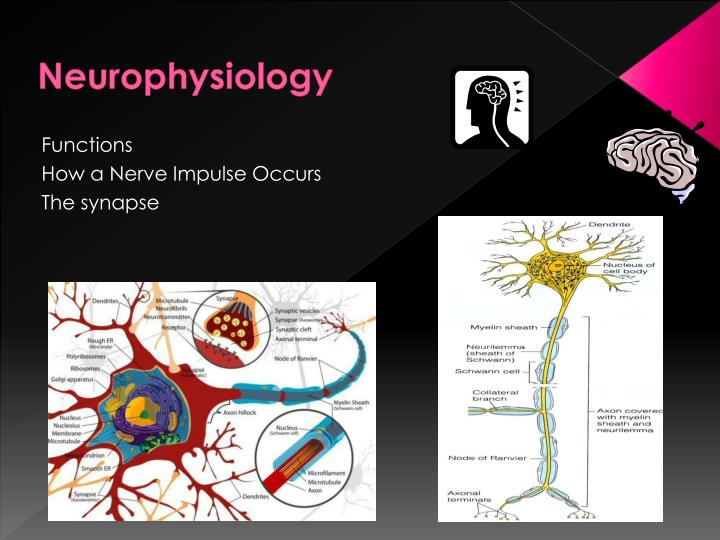 physioex experiment 3 neurophysiology of nerve impulses Introduction to the physiology laboratory physioex 4 – the endocrine physioex 3 – neurophysiology of nerve impulses35 exercise 6: biopac.