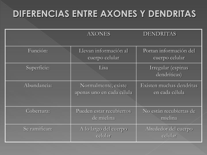 DIFERENCIAS ENTRE AXONES Y DENDRITAS