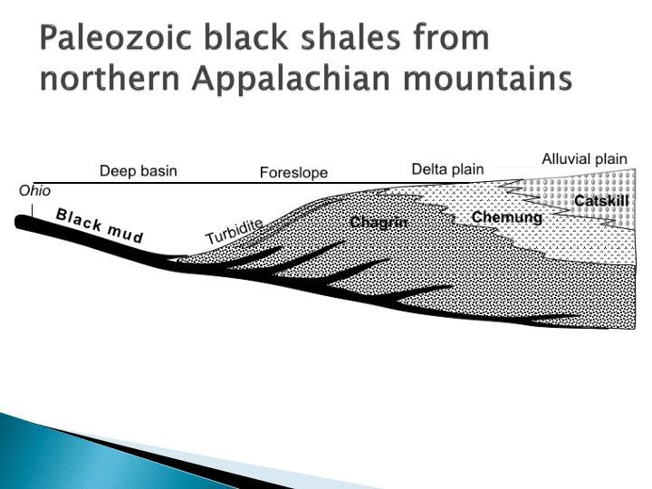 Paleozoic black