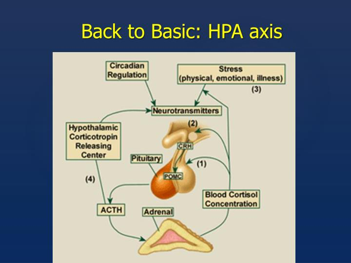 Back to Basic: HPA axis