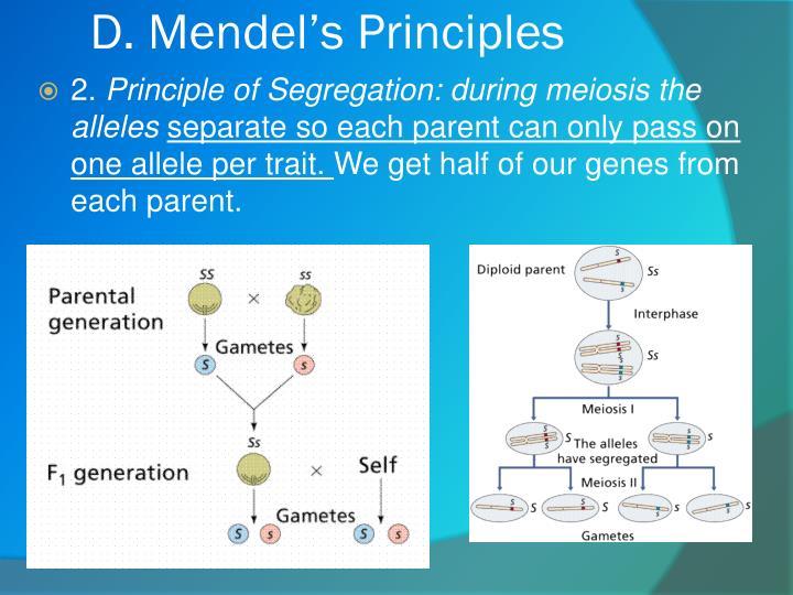D. Mendel's Principles